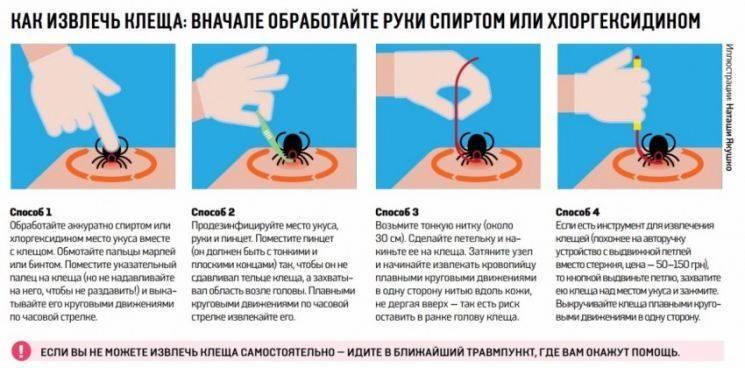 Обнаружение паразита