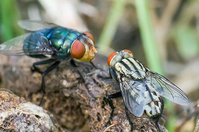Почему мухи садятся на человека