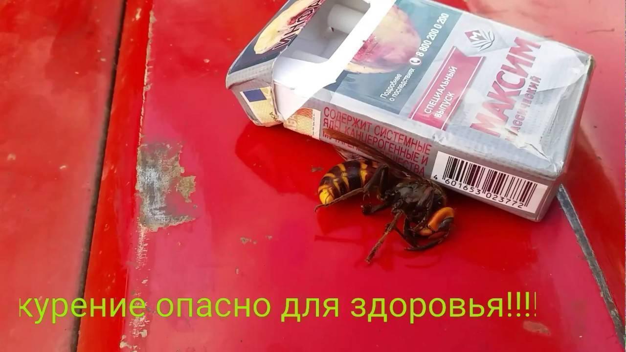 Укусы насекомых
