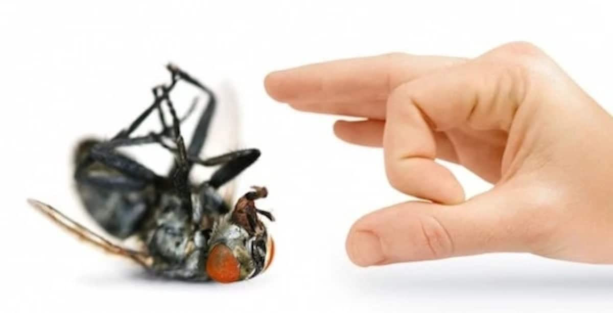Ловушка для мух своими руками: стоит ли результат затраченных усилий?