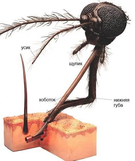 Чем лечить укусы комаров