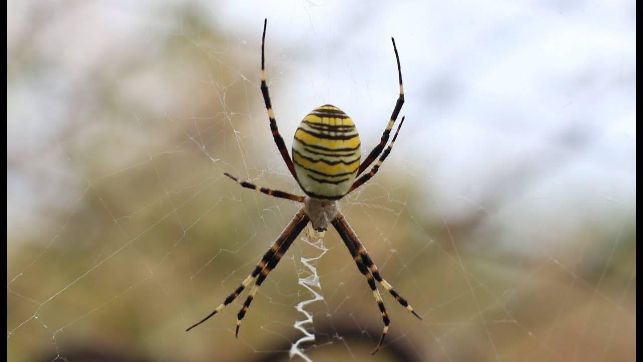 Как распознать укусы насекомых. подробное руководство