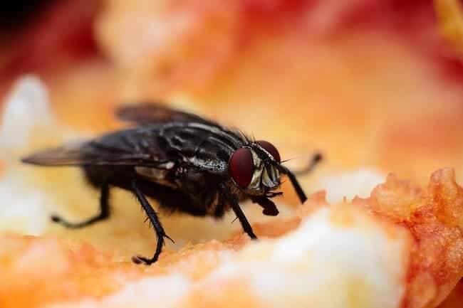 Появились мухи на сороковой день. откуда берутся мухи в закрытом помещении - не секрет. к чему муха залетает в комнату