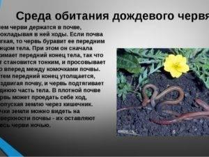 Польза и вред дождевых червей на огороде