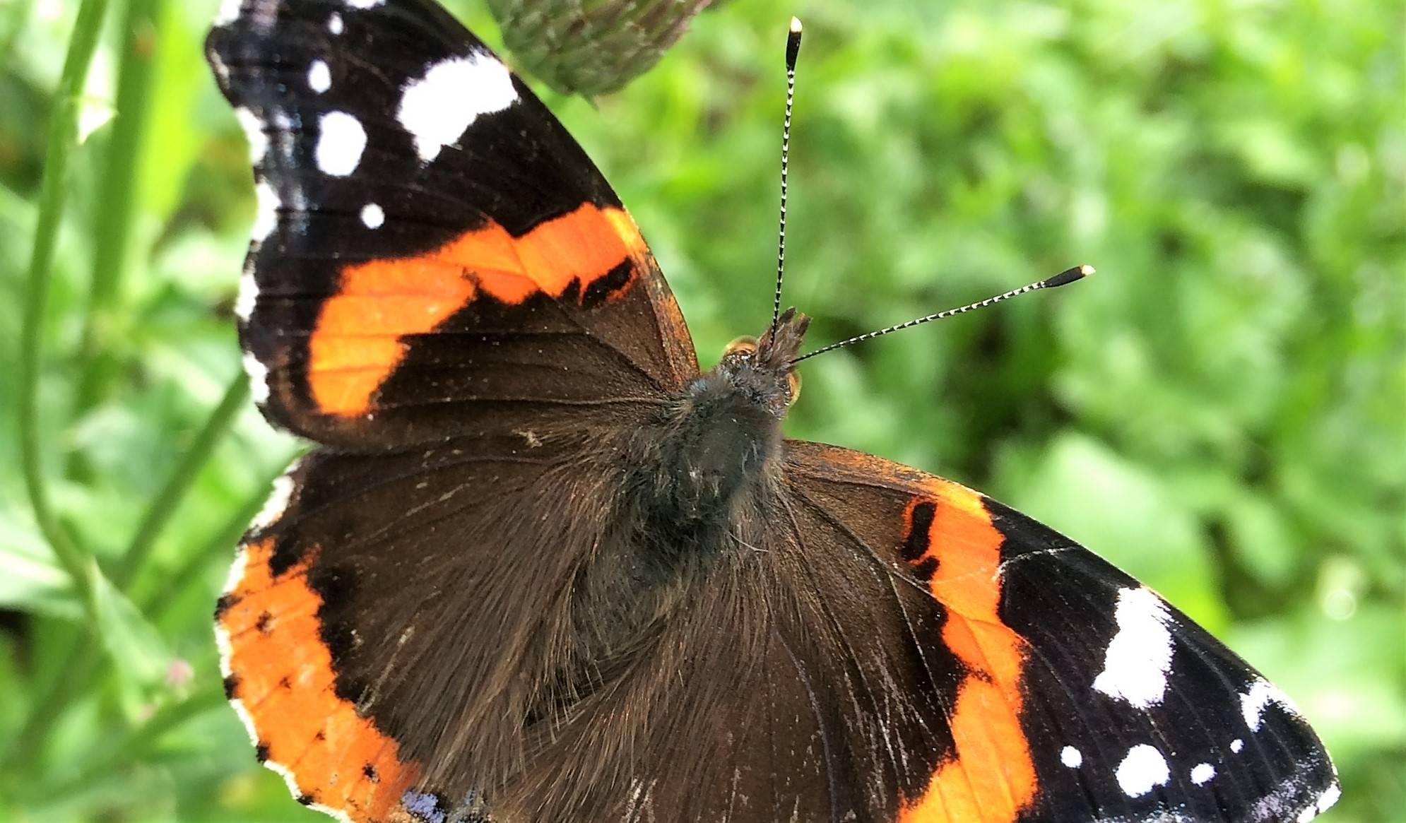 Как избавиться от бабочек и гусениц