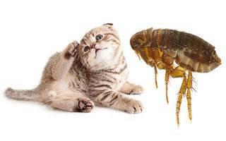 Выведение блох у кошки народными средствами