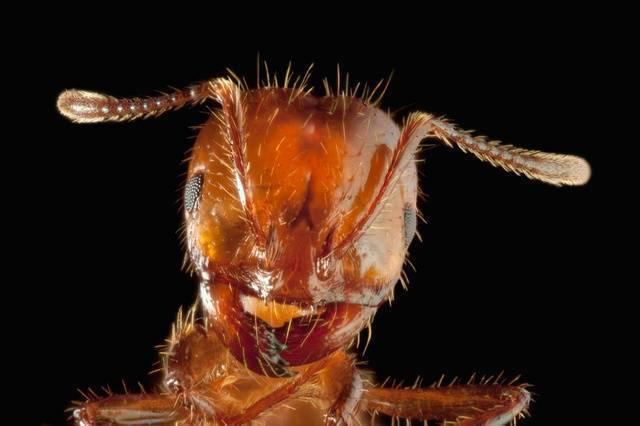 Причины появления муравьев в домах и квартирах