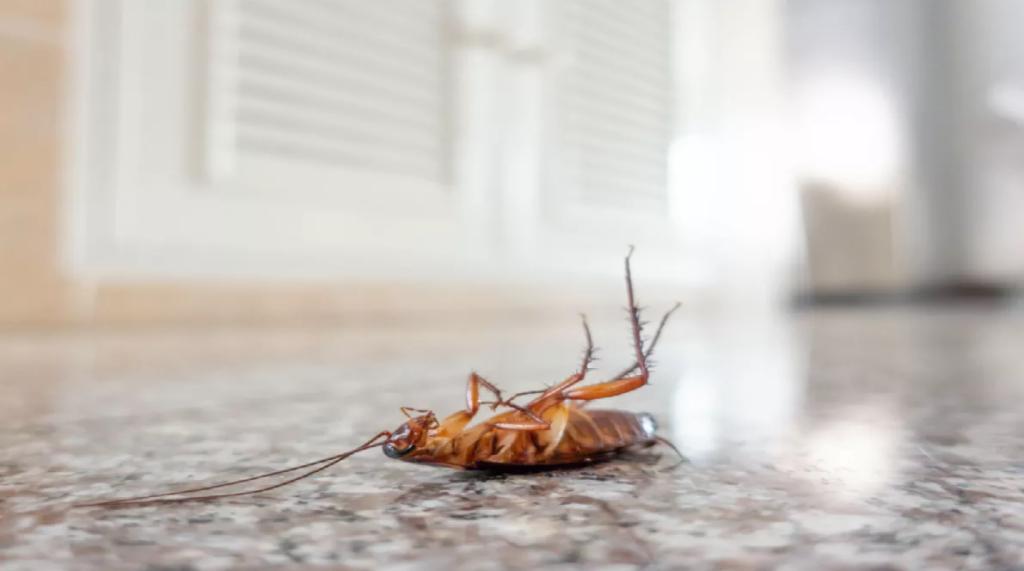 Откуда в квартире берутся тараканы и почему появляются?