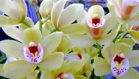 Тля на орхидее: как быстро избавиться, эффективные способы борьбы с вредителем