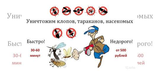 Правила применения дуста от клопов