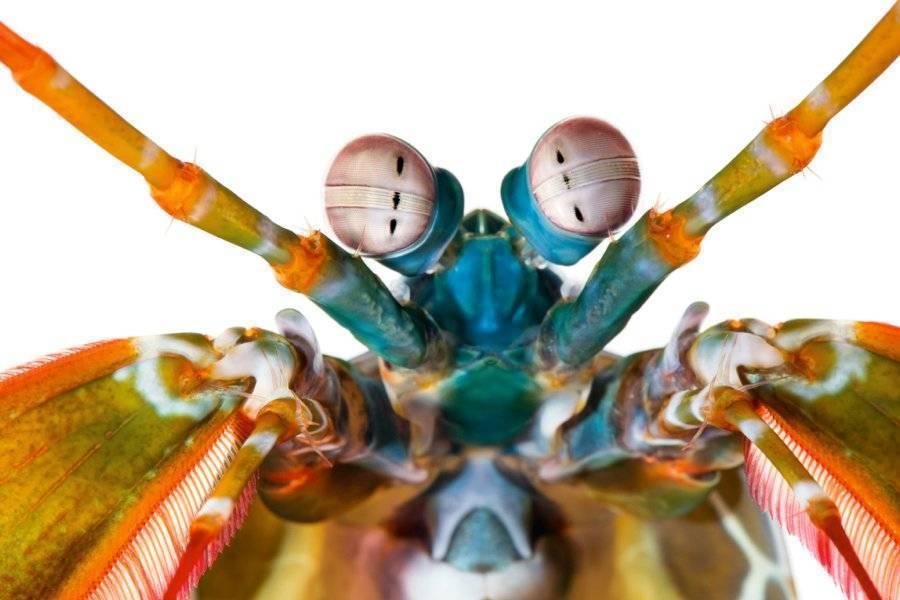 Продолжительность жизни комнатных мух в квартире, жизненный цикл