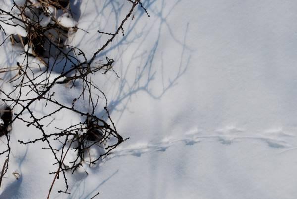 Следы мышей на снегу