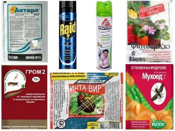 Как избавиться от нематоды на участке: химические и народные средства