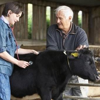 Методы лечения власоедов у коров