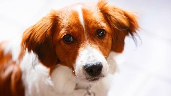 Как бороться с власоедами у собак