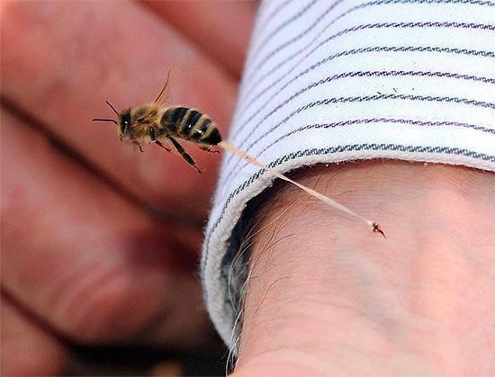 Укусы насекомых: снятие симптомов и лечение