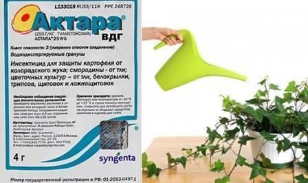 Как избавиться от вредителей, напавших на комнатные растения