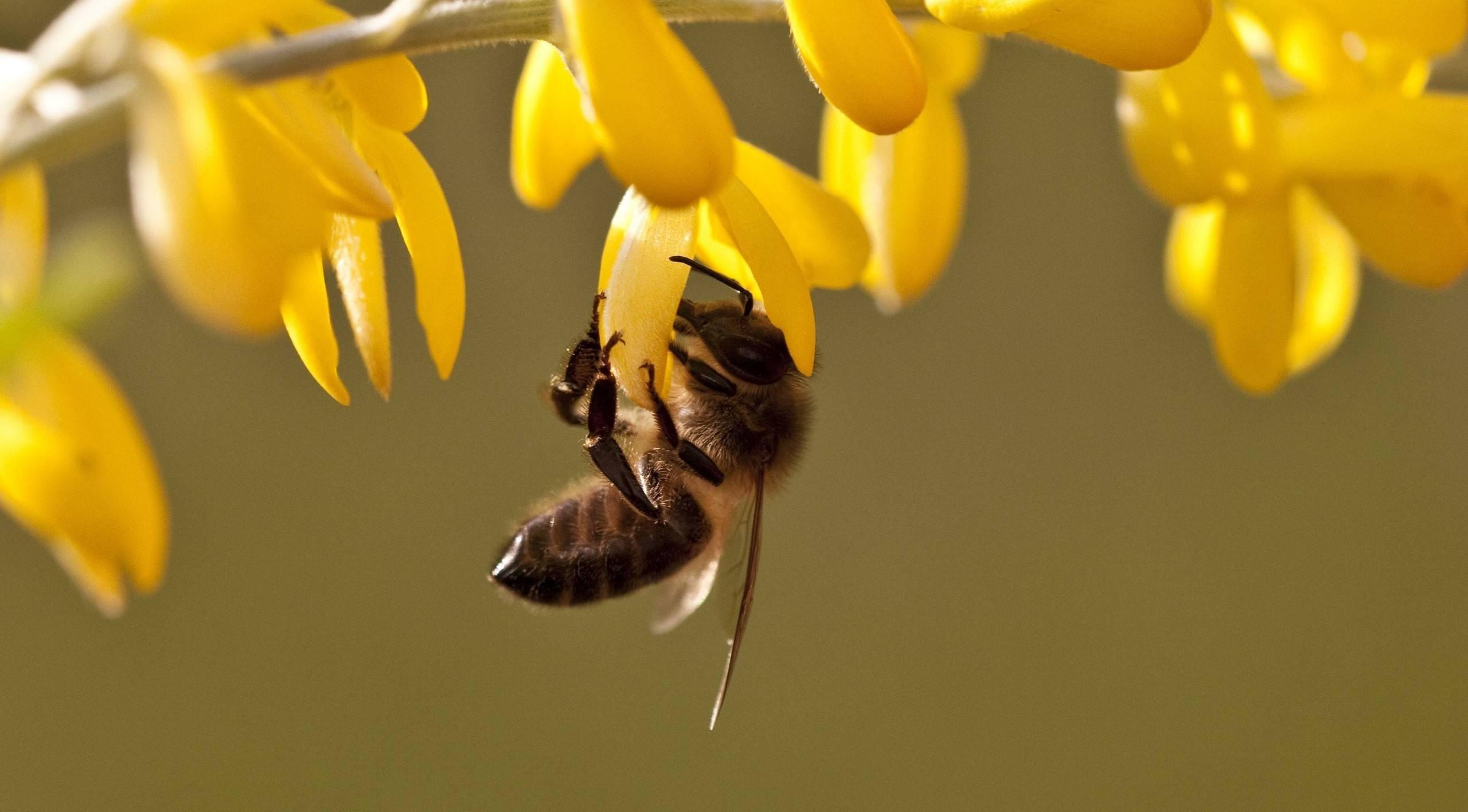 Какие бывают пчёлы: фото и названия