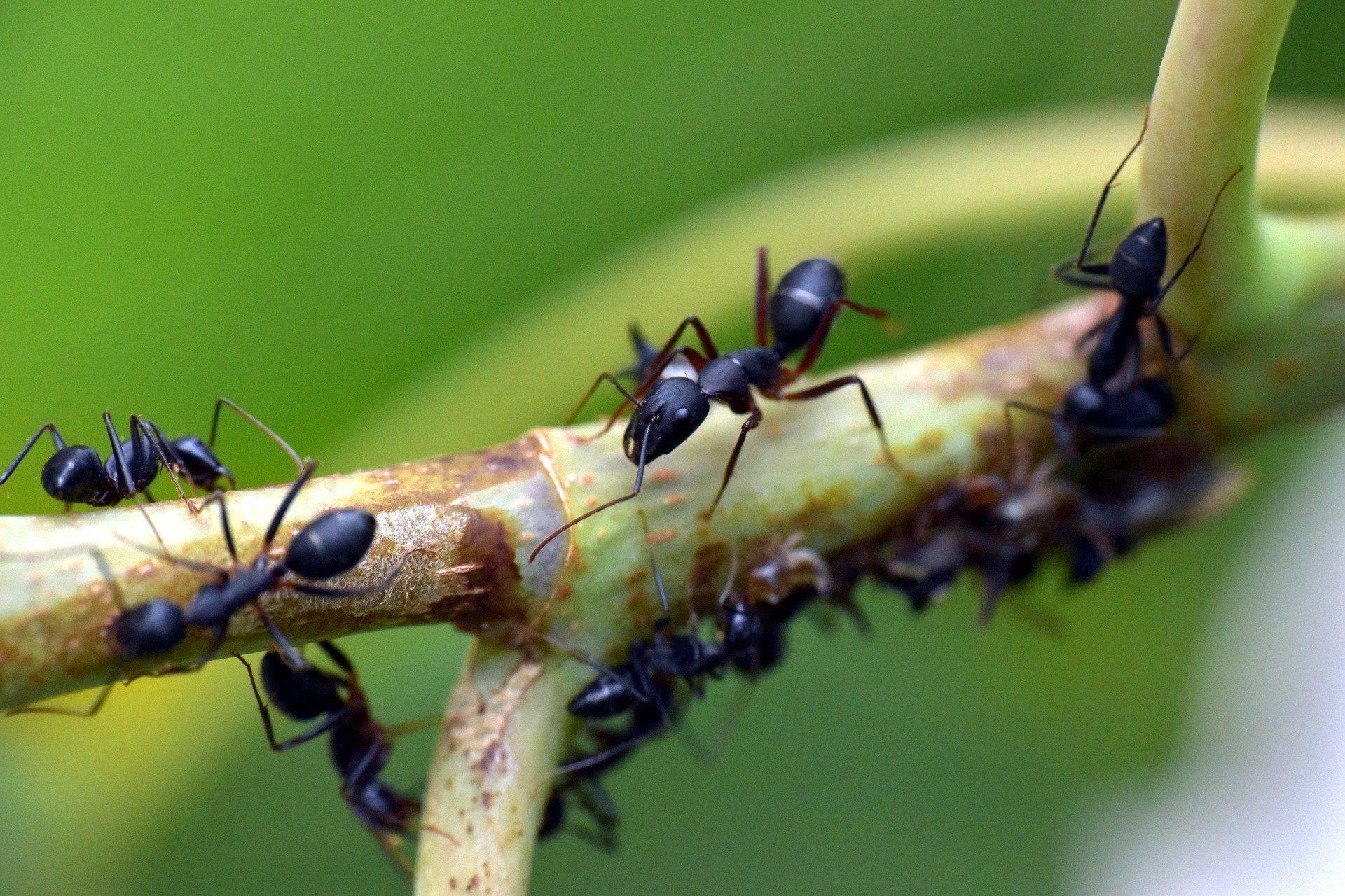 Народные и бытовые способы уничтожения муравьев