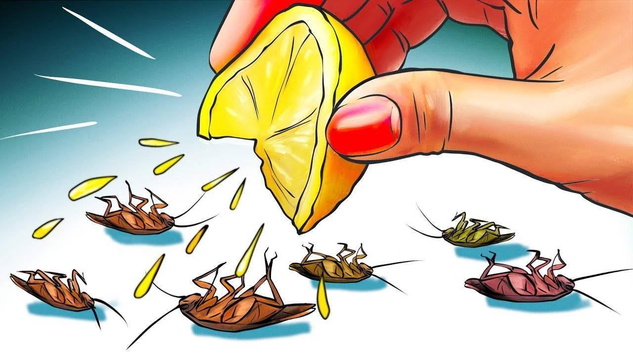 Как избавиться от тараканов в общежитии народные способы и химические средства