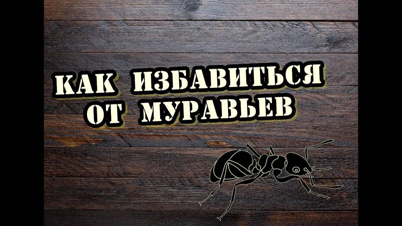 Что не любят муравьи в доме и на участке