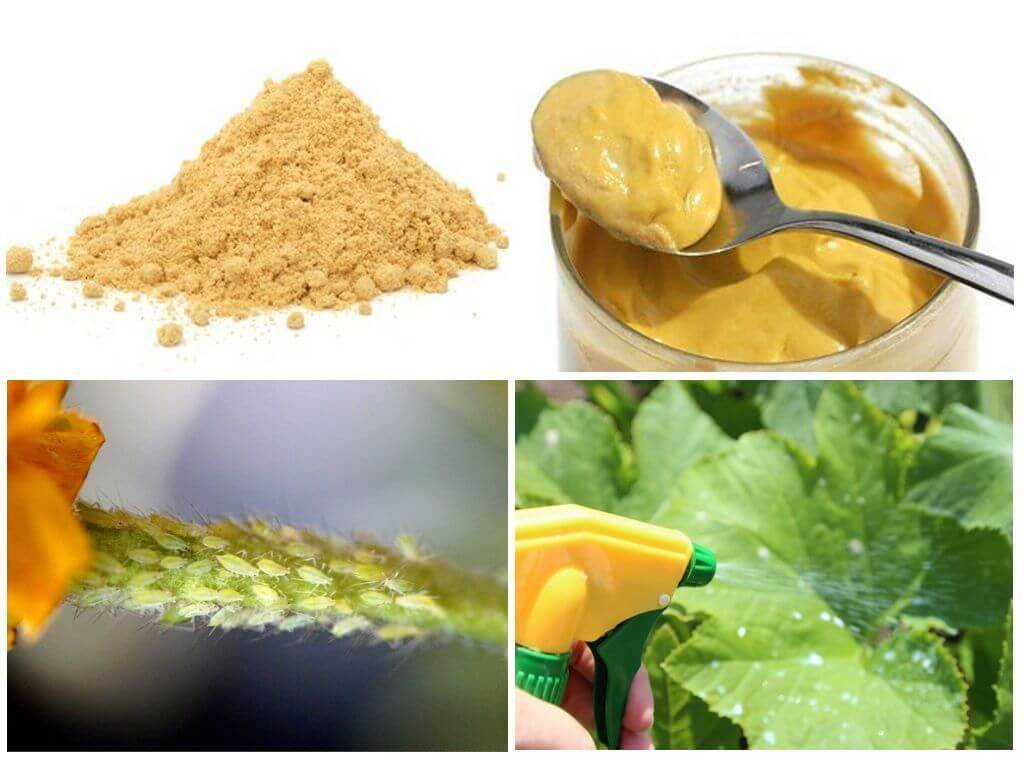 Как применить горчицу для огорода: для чего сажают, польза и вред