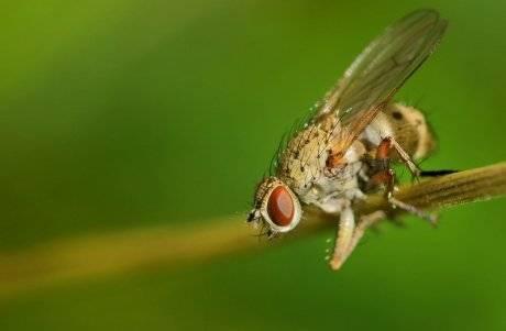 Луковая муха: как бороться с вредителем лука, чем обработать — химические и народные средства