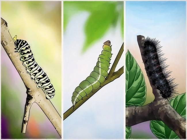 Как и чем лучше весной обрабатывать плодовые деревья от болезней и вредителей