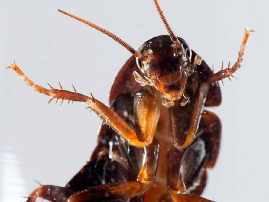 Как навсегда избавиться от тараканов в квартире в домашних условиях?