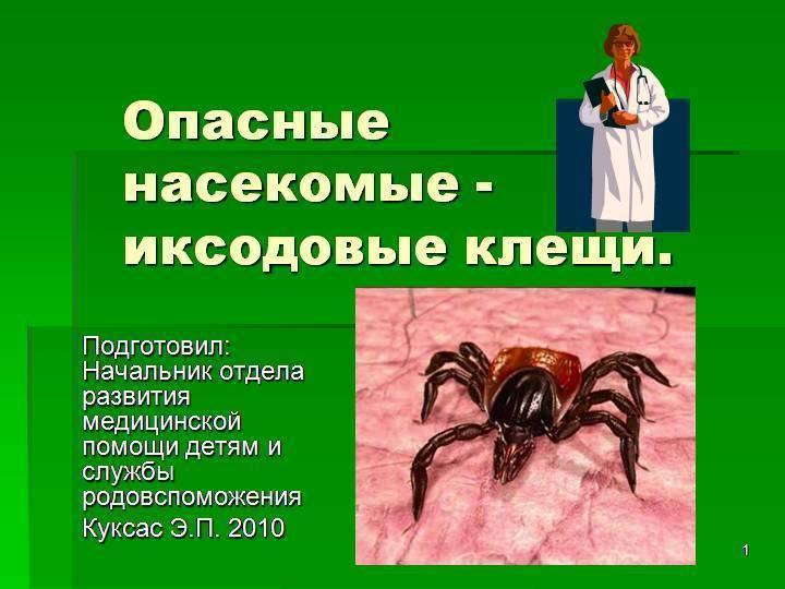 Чем опасны иксодовые клещи, методы борьбы, жизненный цикл паразитов