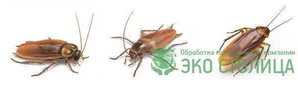 Обработка от тараканов в квартире: вызов на дом, цены
