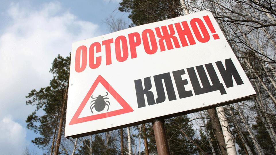 Клещи в Подмосковье – опасность рядом