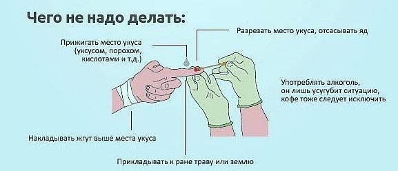Как идентифицировать укус насекомого и оказать первую помощь