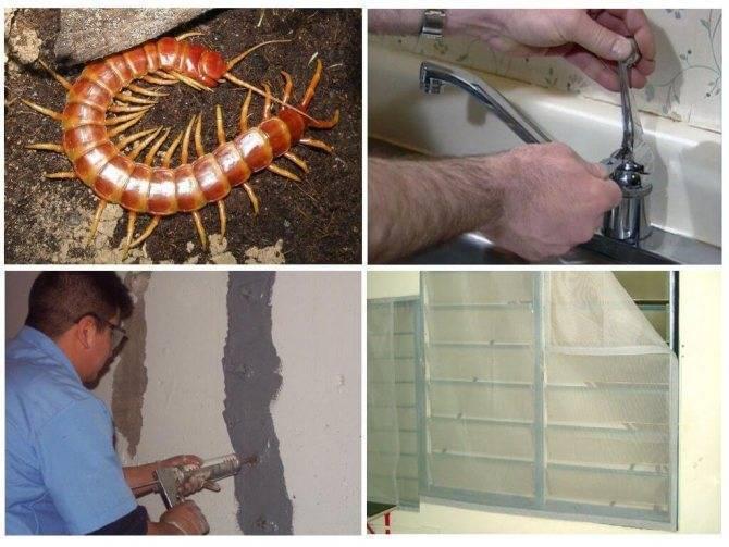 Как избавиться от сколопендры в доме