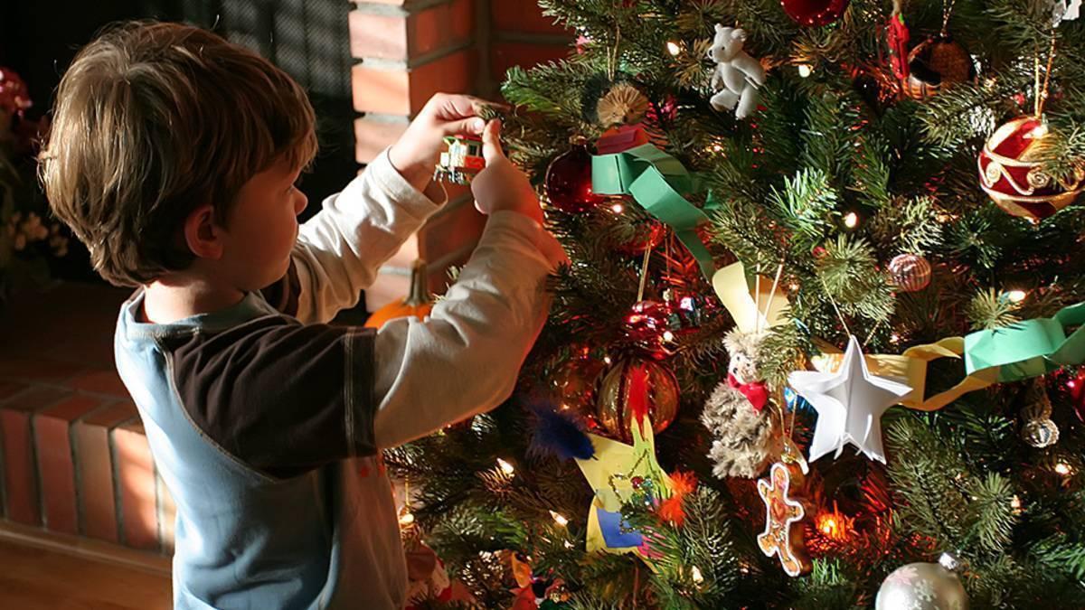 Живая новогодняя елка — мифы и реальность