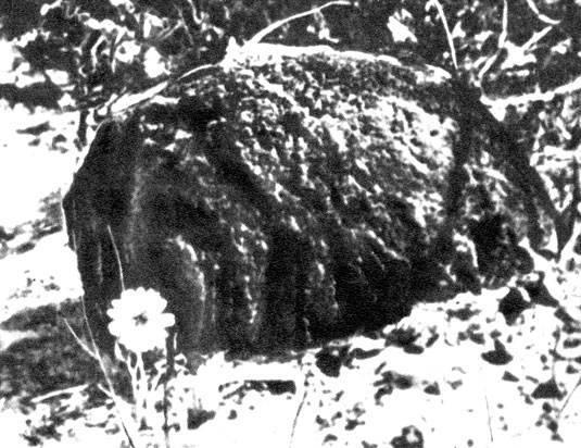 Как выглядят и чем живут термиты