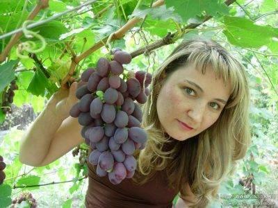 Как спасти виноград от мух. как уберечь виноград от ос – описание эффективных методов защиты урожая