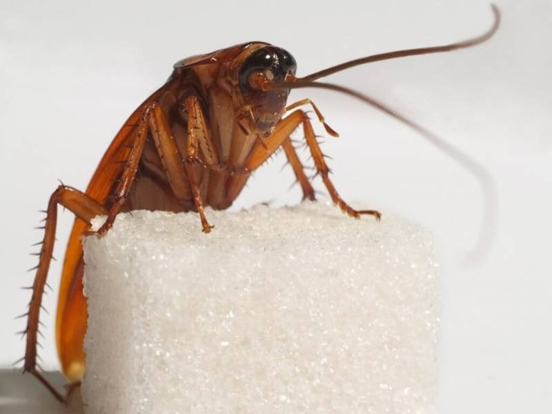 Боязнь тараканов(блаттофобия): как избавиться и называется фобия