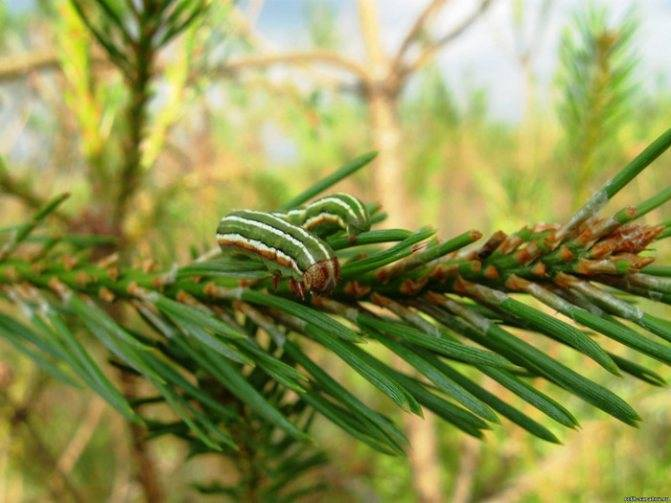 Болезни и вредители сада: обработка весной, в апреле и мае