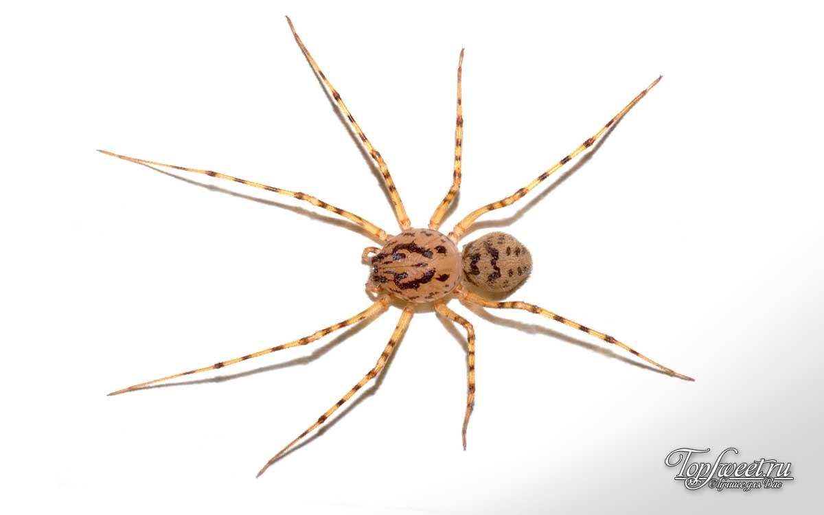 Самые большие и опасные пауки в мире: разъясняем со всех сторон