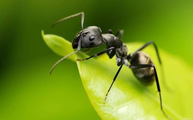 Как растолковать сон о муравье или муравейнике?