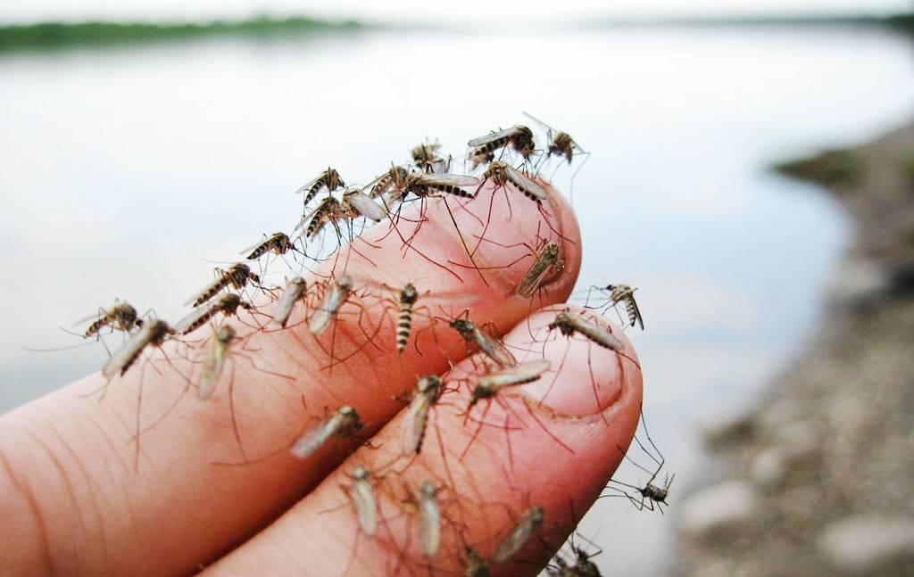 Есть ли комары в турции