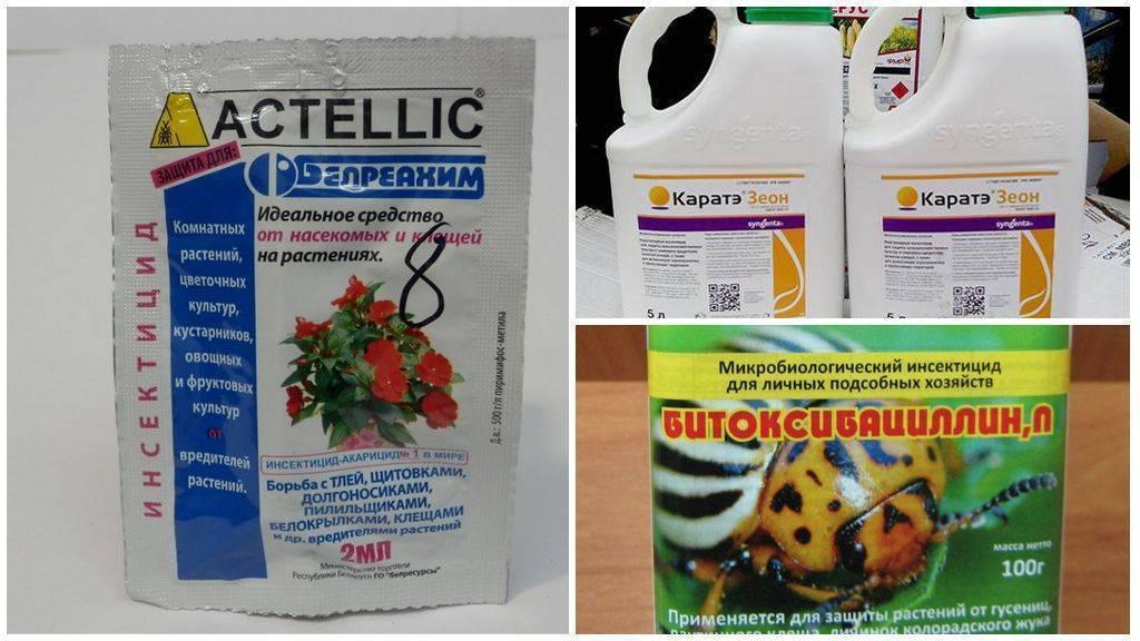 Акарициды: свойства, действие, обзор всех видов и полный перечень зарегистрированных препаратов