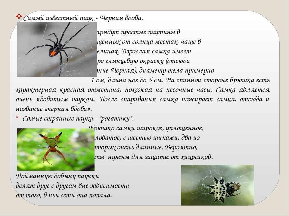 Сколько ног у паука и почему всё не так однозначно