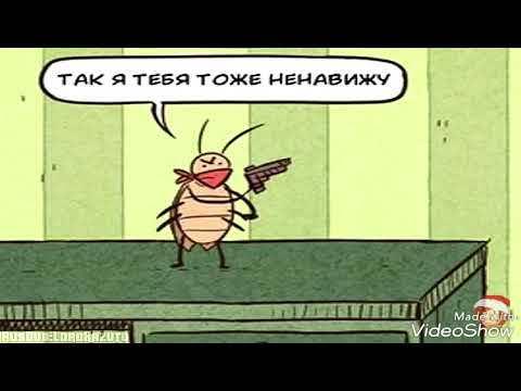 Особенность черных тараканов