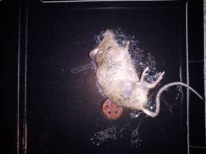 Клей для мышей: чем оттереть от поверхности