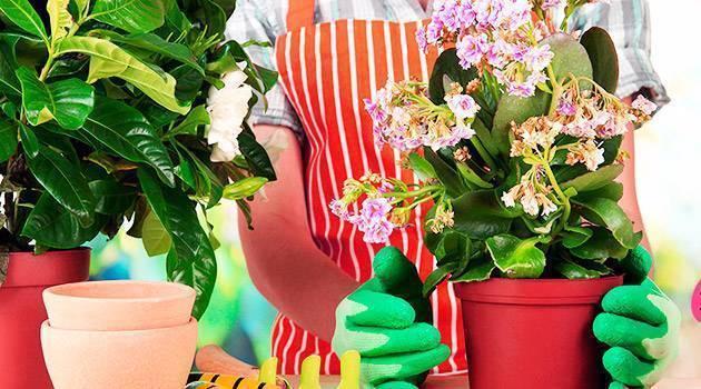 12 способов избавиться от мошек в цветочных горшках