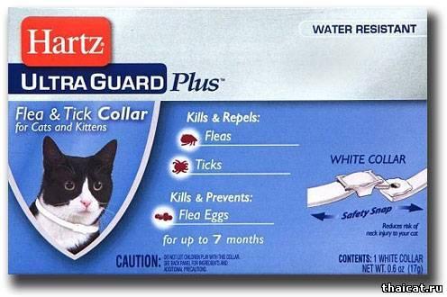 Что необходимо знать, прежде чем приобретать ошейник от клещей для кошек?