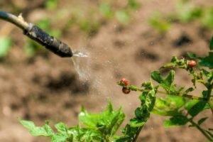 Обзор и правила использования отравы от колорадского жука