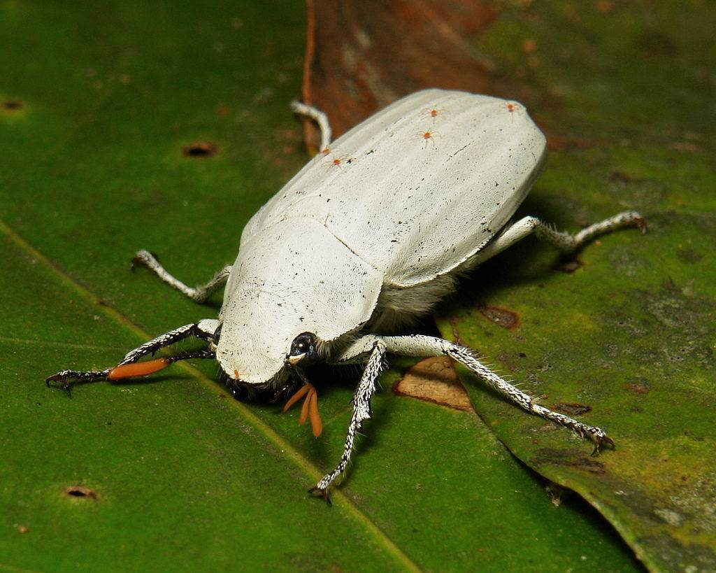 «сонник жук приснился, к чему снится во сне жук»